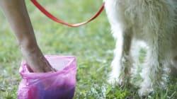 Furieuse, une ainée lance un sac de caca de chien en pleine face d'un de ses