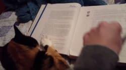 猫と一緒に本を読むのはとても難しい(動画)