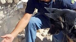 Il cane Leo salva una bimba sotto le macerie. La polizia: