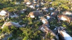 En Norvège, la foudre tue plus de 300