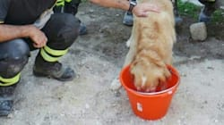 Ce chien a passé neuf jours sous les décombres après le séisme en