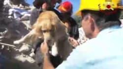 Questo cucciolo è stato salvato dopo 10 giorni sotto le macerie