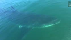 Un garçon et son père surpris par un immense requin blanc