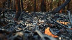 Torna la stagione degli incendi, le foreste pluviali tropicali sono in