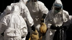 Bird Flu Study 'Censorship' To Be Addressed By