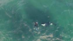 Quand ce kayakiste croise des orques... il nage avec
