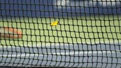 Murray explose un papillon (mais l'insecte a été