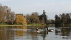 Après le bassin de la Villette, la baignade dans le lac Daumesnil envisagée à