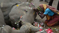 Elephant Death Toll Rises As World Awaits Supreme Court