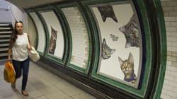 Ces chats envahissent le métro et prennent le contrôle des publicités