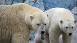 Des scientifiques encerclés par des ours polaires dans une base en