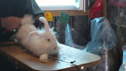 Des images choquantes d'élevages de lapins