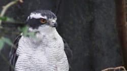 種の保護から生態系の保全へ!「種の保存法」改正に向けた16の提言