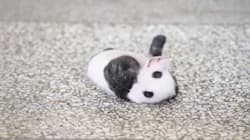 This Freaking Adorable Baby Panda Tries Really Hard To Roll