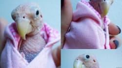Esta es Rhea: el pájaro sin plumas que ha enamorado a las redes