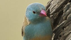 Vas a alucinar con lo que hace este pájaro para