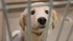 Alberta Humane Society Rescues 71