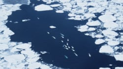 Canada Must Step Up Its Marine Protection