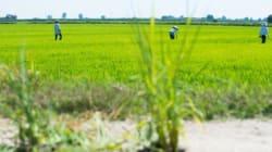 Su Monsanto-Bayer, altre InCorporations e alternative di