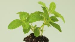 Carbon Dioxide: Pollutant Or Plant