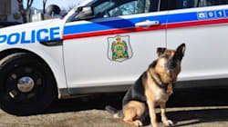 Judge Dismisses Lawsuit After Police Dog Attacks Saskatoon