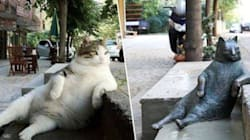 La gatta più amata di Istanbul è morta. Gli abitanti del quartiere le dedicano una