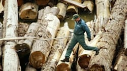 Canada And U.S. Cut Softwood Lumber