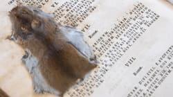 Você consegue NÃO olhar para este rato esmagado dentro de um livro do século