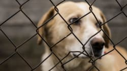 My Animal Cruelty Bill Was Defeated -- Here's What's