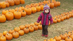 13 Fun And Spooky Pumpkin Patches To Visit Across