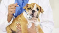 Get The Most Out Of Your Pet's First Vet
