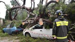 Il maltempo spaventa la Liguria, albero su scuolabus a Roma fa tre