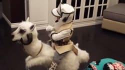 Ce petit garçon a le meilleur déguisement «Star Wars»