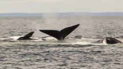 Canada's Oceans Need Meaningful Protections. Here's