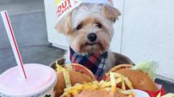 Ce petit chien abandonné mange dans les restaurants du monde