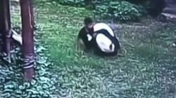 Panda Takes Down Genius Who Was Trying To Impress