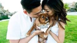 19 chiens qui font une heureuse
