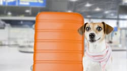 Think Twice Before Flying Your Pet In