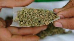 「大麻は悪」という印象だけ残して思考停止していいのでしょうか?