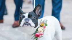 Ces 22 chiens avaient fière allure au mariage de leurs