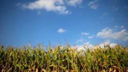 Como a agropecuária pode contribuir para enfrentar as mudanças do