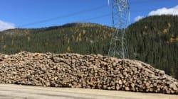Gaspillage de la forêt québécoise au chantier de la