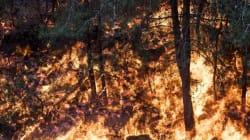 Israël: des incendies forcent l'évacuation de 50 000