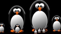 El cambio de algoritmo Penguin y las consecuencias para los