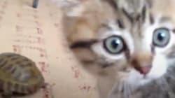 ¿Qué pasa cuando un gato ve por primera vez a una
