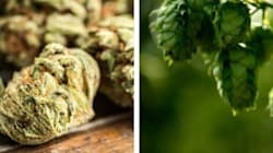 3 Thieves Arrested In P.E.I. After Mistaking Hops For