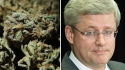 Harsher Penalties For Pot Growers Than For Pedophiles? He