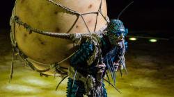«OVO» du Cirque du Soleil : des insectes charmants, sans