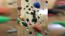 Fearless Rescue Cat Scales Rock Climbing Wall Like A