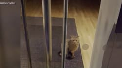 Cat 'Burglar' Gets Locked Inside Bank, Twitter Has Field